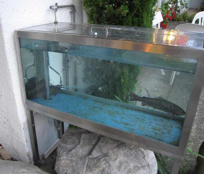 Großes Aquarium Kaufen : tierqu lerei forellen vivier restaurant rigi royal immenssee ~ Frokenaadalensverden.com Haus und Dekorationen